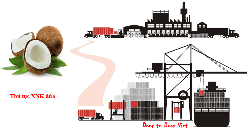thủ tục xuất khẩu dừa